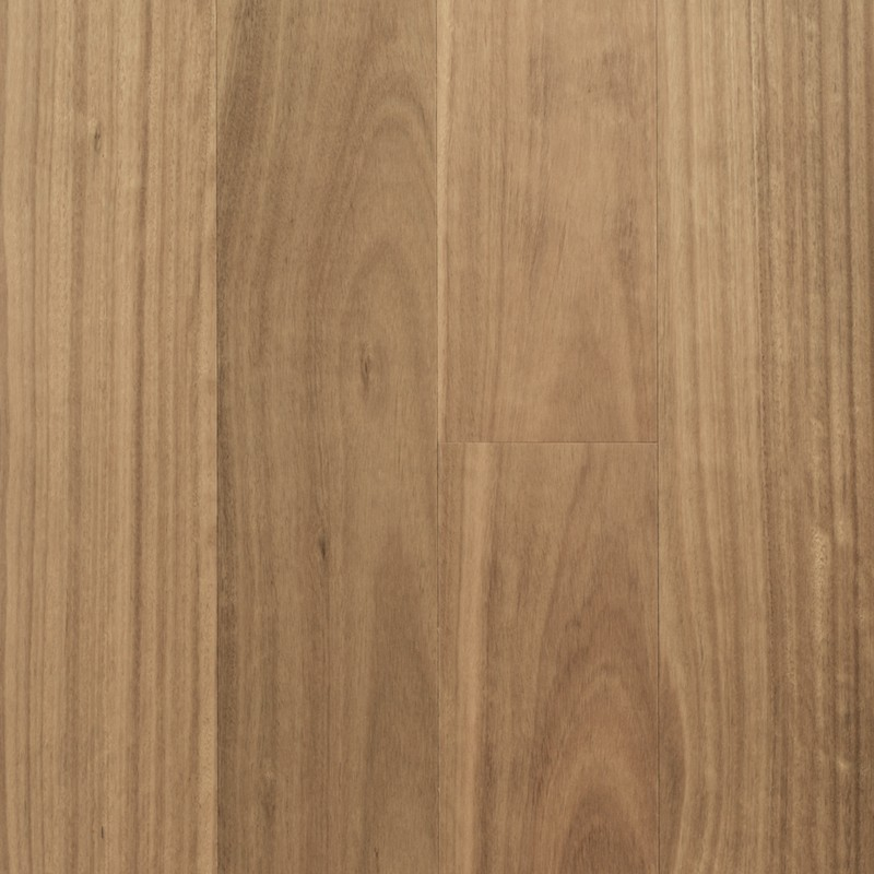 Regency Advanced Blackbutt Timber Veneer sample