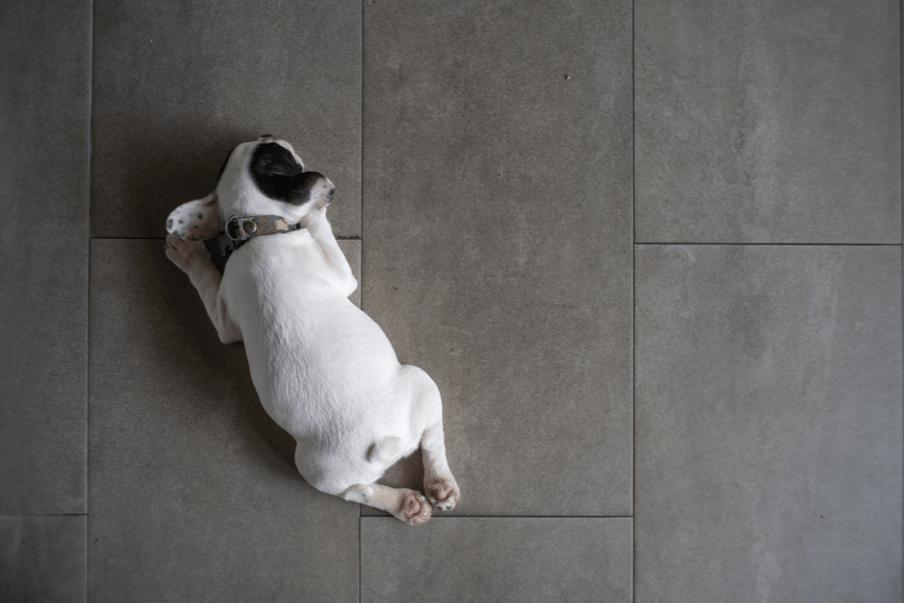Home renovation tips: Top 6 tile options