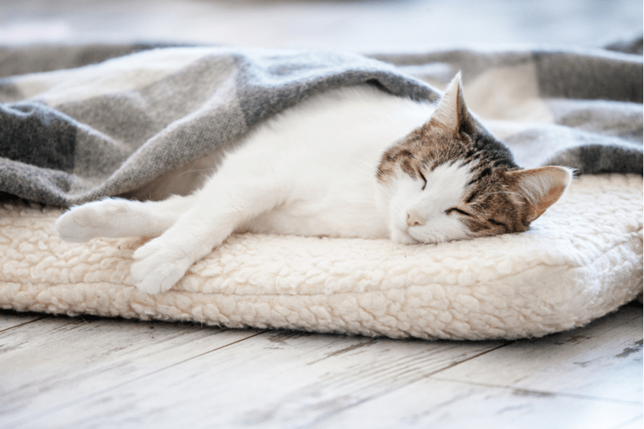 Pet-friendly rugs: What should be kept in mind?